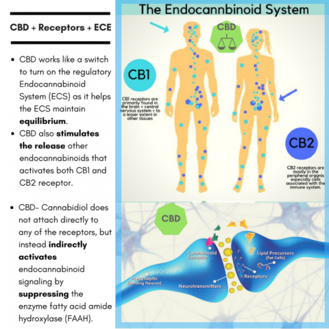 CBD and other Cell Receptor Sites page announcement