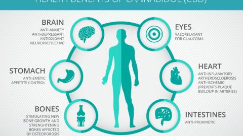 CBD Health Benefits Part 1 page announcement