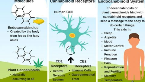 How Does CBD work? page announcement