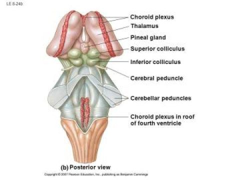 Pineal Gland Structure page announcement
