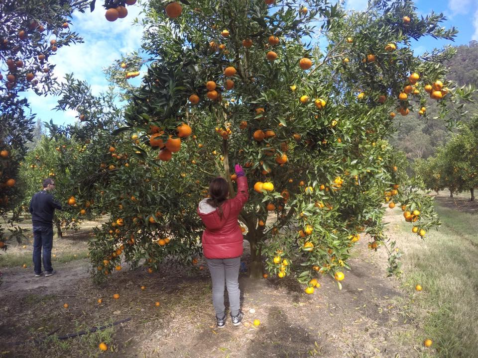 travel-citrus