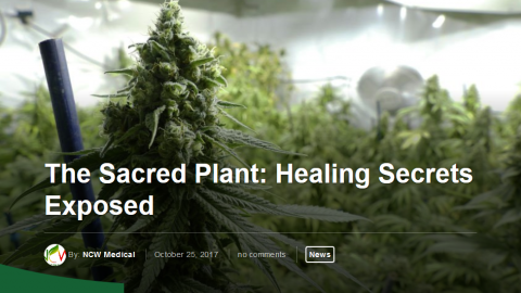 The Sacred Plant:  Healing Secrets Exposed – Wed 18 Sep 2019 – 7pm