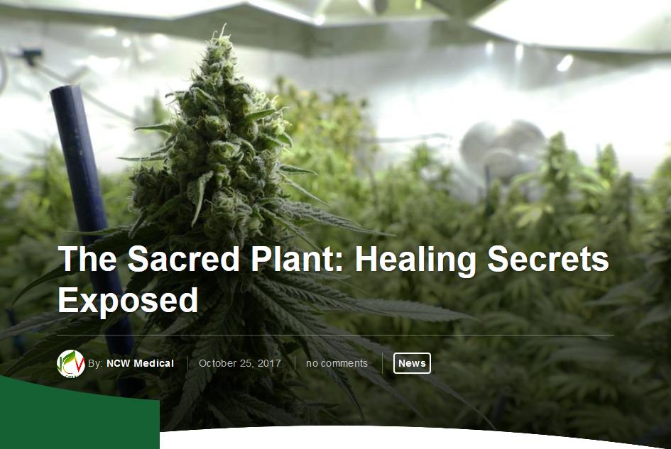 vv20190918-1cannabis